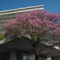 Hotel Guarani Asuncion Exterior