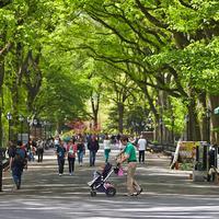 바이스로이 센트럴 파크 뉴욕
