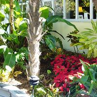 Merlin Guest House - Key West Garden