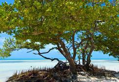 Albury Court Hotel - Key West - 키웨스트 - 해변